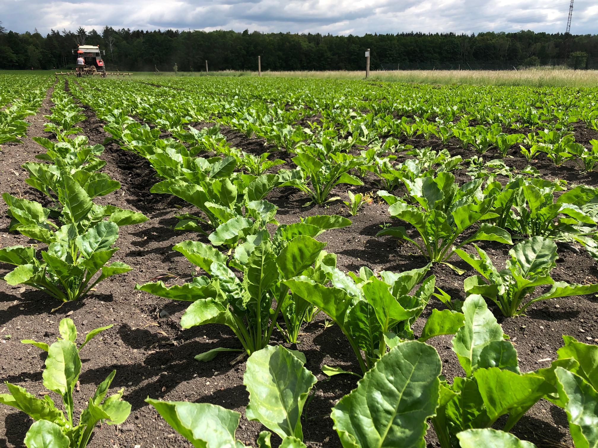 Zemědělec Hašek Velká Dobrá Kladno nedávné realizace (4)